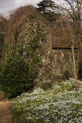 Snowdrops and Aconites (phillipbonsai) Tags: benington snowdrops aconite