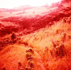 Labyrinth in Bloom (liquidnight) Tags: red film nature analog mediumformat river landscape outdoors washington lomo xpro lomography crossprocessed fuji hiking toycamera meadow surreal velvia dreamy wildflowers analogue pnw rvp100f dreamscape blooming inbloom red pouva gorge coyote pacific wall shift columbia northwest labyrinth start pouva