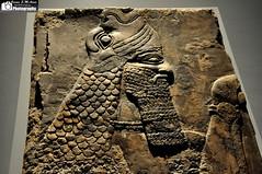 A protective spirit, Apkallu, wearing a fish-cloak (Assyria, Babylon, Akkad, Sumer...) Tags: fish london museum temple iraq british cloak mesopotamia assyria nimrud neoassyrian kalhu ninurta apkallu calah abkallu