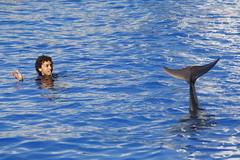 bottlenose dolphin (Olaya Garcia) Tags: espaa valencia canon eos spain dolphin delfin bottlenose oceanografic golfinho oceanografico bottlenosedolphin tursiopstruncatus loceanografic tursiops truncatus mular roaz delfinmular arroaz 1000d narizdebotella golfinhoroaz