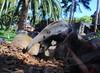 Giant Anteater - Loro Park - Tenerife (pelpa_666) Tags: park parque fish animals cat canon star penguin ray chimp dolphin tiger killer crocodile tenerife whales orca jaguar canaries loro skink 550d