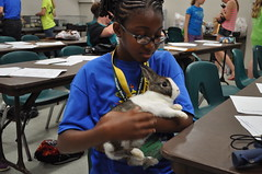 Exploration Days 2014 - Wednesday 115 (msuanrc) Tags: bunnies animals youth diverse science volunteering rabbits 4h explorationdays