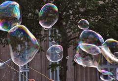 Seifenblasen (stephan200659) Tags: politik bubble grüne spd bolla bulle soapbubble pompa seifenblasen uwg bolladisapone bulledesavon pompadejabón