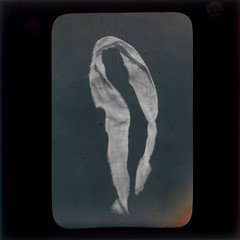 A Psychic Apparition (Tyne & Wear Archives & Museums) Tags: photography weird scary spirit ghost experiment fake surreal eerie creepy demonstration odd textile study fabric unknown material cloth lecture paranormal psychic spiritphotography bizarre fraud apparition physical supernatural remarkable ectoplasm testcase blackandwhitephotograph lanternslides anewangle mrcpmaccarthy