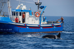 Estrecho de gibraltar (Pablo Gil Garcia) Tags: killer whale whales gibraltar strait orcas turmares killerwhalewhales orcaorcinusorcatarifacadizspainwhalewachtingwhalewhachtsummersummertimetunatunabittten