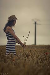 Desire (m0nt2) Tags: red nikon wheat 100mm tokina desire poppy ochre wheatfield m0nt2