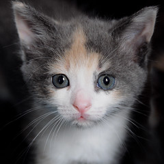 innocence (courtney065) Tags: nikond90 cats animals pets feralkittens feline whiskers pinknose