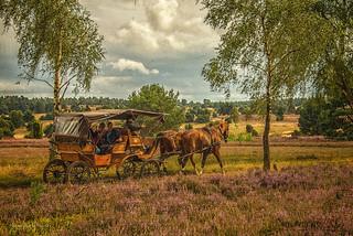 Lüneburger Heide - Kutschfahrt nach Wilsede