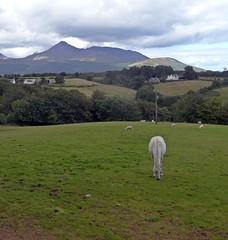 Horse And Goat (Bricheno) Tags: horse mountain field scotland farm escocia arran isleofarran szkocja schottland goatfell scozia cosse  esccia corriegills   bricheno scoia