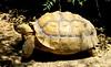 Turtle one (copito_m) Tags: naturaleza color nature animal nikon animales mywinners abigfave aplusphoto