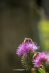 Fleißige Bienchen #2