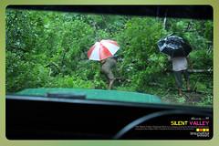 Silent Valley---------------05 (Binoy Marickal) Tags: india green tourism nature water rain kerala mala palakkad evergreenforest treaking silentvalleynationalpark nilgirihills mannarkkad mukkali kuzhur indiabinoymarickal