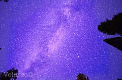 MilkyWay (FVelasco) Tags: trees colors pine night stars nikon exposure slow purple space galaxy