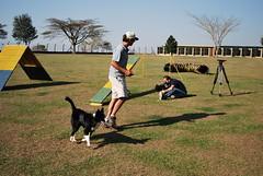 DSC_0109 (Clube de Cãompo Hotel Fazenda para Cães) Tags: votorantim estimacão hotelfazendaparacães clubedecãompohotelfazendaparacães