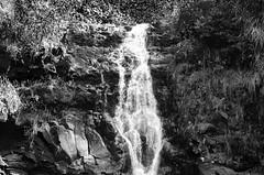 Waimea Falls DSC2794 (iloleo) Tags: bw nature landscape hawaii waterfall oahu scenic waimeafalls nikond7000