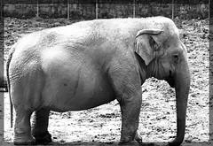 Image12 - Copia (Daniel.N.Jr) Tags: animal selvagem zoologico kodakz990