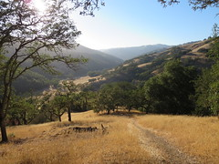Henry W. Coe State Park (John Steedman) Tags: california usa america unitedstates unitedstatesofamerica northamerica estadosunidos 美國 norteamérica nordamerika amériquedunord américadelnorte 北アメリカ カリフォルニア州 アメリカ合衆国 加利福尼亚州 北美洲