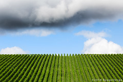 Vigneti Ghemme (beppeverge) Tags: clouds vineyard wine vino blusky vigna vigneti filari ghemme beppeverge