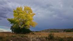 LLeg el otoo ...............  The autumn came (anpegom) Tags: autumn espaa spain otoo monte palencia castillaylen chopo cerrato cevicodelatorre anpegom