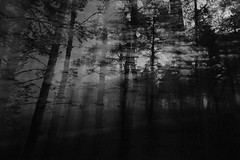 Night Forest Outlines ([JBR]) Tags: wild naturaleza white abstract black blur france tree blanco nature monochrome night forest arbol grey gris mono noche movement noir natural pentax negro natura movimiento september bosque arvore 55 abstracto francia nuit foret arbre blanc septembre flou mouvement naturelle sauvage abstrait 2014 jbz jbr alpesmaritimes naturel jibz pentaxart k5ii jbrphoto jbrphotography
