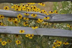 flowers in the fence (bbosica20) Tags: flowers gettysburg gettysburgnp