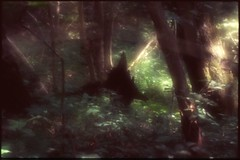 (bensn) Tags: trees light film japan woods triangle soft pentax 85mm slide velvia stump 100 nagano f28 fa l