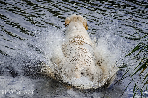 Lopen over het water lukt toch niet70_HST-9183.jpg