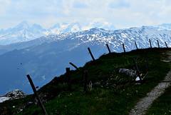 Rückblick (balu51) Tags: juni sommer berge 60mm aussicht zaun landschaft laax wanderung abfahrt 2015 graubünden skigebiet surselva tödi crapsogngion plaun copyrightbybalu51 crapmasagn