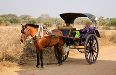 Horse cart carrying tourists in Bagan, Myanmar (phuong.sg@gmail.com) Tags: archeology architecture art asia asian attraction bagan buddhism buddhist burma burmese carriage cart culture dirt exploring heritage horse landmark myanmar pagoda religion religious revered road serene sightseeing southeast stupas temple theravada tour tourism tourist tourists tradition traditional tranquil travel wagon worship