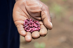 Pre-cooked beans save time, fuel & boost nutrition
