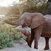 Samburu Kenya-154.jpg
