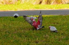 2014-05-25_14-35-23_03 (J Rutkiewicz) Tags: birds