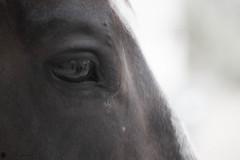 Equine Acupuncture in Tucson (John Conaway _ Art & Design) Tags: horse tucson az chi acupuncture equine energyhealing alternativemedicine soreback equineacupuncture ancientchinesemedicine sorebackinhorse