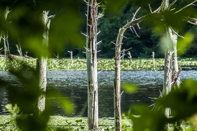 Jackson-Washington State Forest - Knobstone/Backcountry Trails - Spurgeon Hollow Lake - June 25, 2014
