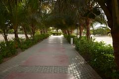 DSC_0904 (neil@) Tags: verde cabo boa vista cape boavista capoverde