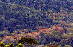 Atlantic Forest - Bahia