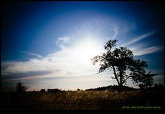 140706-1865-EOSM.jpg (hopeless128) Tags: sky france eurotrip lonetree 2014 poitoucharentes bioussac soletree