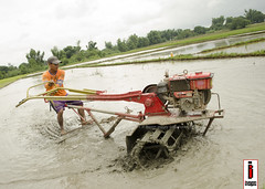 Halang/Linang 04 (Soil Cultivation) (ilusyonimages) Tags: street tractor asian photography asia farm philippines farming images illusion filipino farmer ricefields handtractor ilusyon