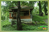 Silent Valley---------------35 (Binoy Marickal) Tags: india green tourism nature water rain kerala mala palakkad evergreenforest treaking silentvalleynationalpark nilgirihills mannarkkad mukkali kuzhur indiabinoymarickal