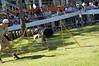 DSC_0265 (Clube de Cãompo Hotel Fazenda para Cães) Tags: agility jundiaí estimacão clubedecãompo clubedecãompohotelfazendaparacães hotelfazendaparacãesituclubedecãompo