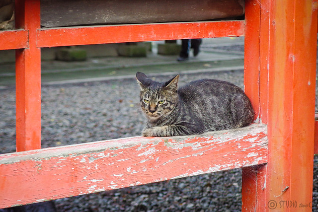 Today's Cat@2014-08-25