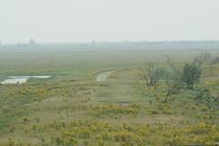 DSC06575 (Ton Smilde) Tags: oostvaardersplassen naturereserveinthenetherlands