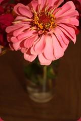 __ (bebe0o0) Tags: وردة ورود زهرة ورده أزهار bebe0o0