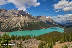 Peyto Lake, Banff National Park, Alberta, Canada (David Maslen) Tags: trees lake mountains color colour green nature clouds canon rockies natural turquoise glacier banffnationalpark t3i peytolake canadianrockies cloudshadows