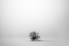 Mostly White (Todd Klassy) Tags: old winter blackandwhite snow abstract cold tree art nature ecology monochrome beauty field weather horizontal mystery wisconsin rural season landscape death one countryside frozen bush solitude alone moody loneliness natural emotion cloudy outdoor snowy background space branches belleville magic small country snowstorm peacefu