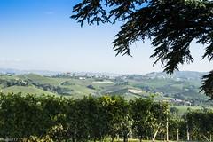 You are in Langa (riccardo.bordese) Tags: nikon estate piemonte be piedmont barolo barbera langhe dol dolcetto beiposti d5300