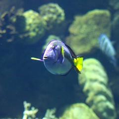 columbuszoo columbus usa fish public animals america zoo aquarium unitedstatesofamerica