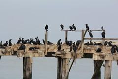 IMG_0602 (thomas pix) Tags: monterey watching whale humpback mossbeach