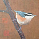 "Atkinson_Nuthatch <a style=""margin-left:10px; font-size:0.8em;"" href=""http://www.flickr.com/photos/11233681@N00/14944087318/"" target=""_blank"">@flickr</a>"