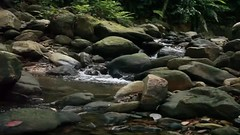 By the stream in video (yachtpagos) Tags: travel green water beauty wonder video moss amazing rocks stream soft malaysia langkawi